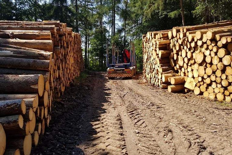 Holzlager im Wald von Kronseder